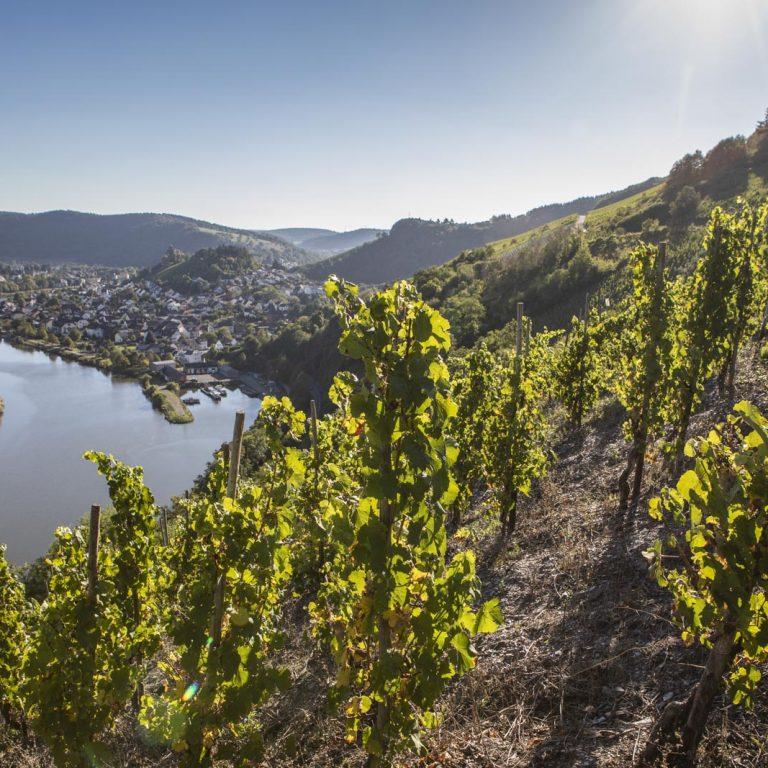 Weinlage mit Blick auf Saarburg