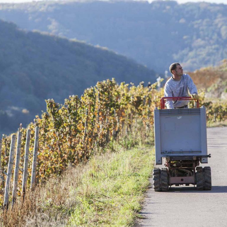 Sustainable wines from the best vineyards of the Saar