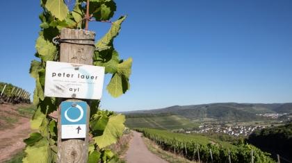 Weingut Peter Lauer beim Saar Riesling Sommer