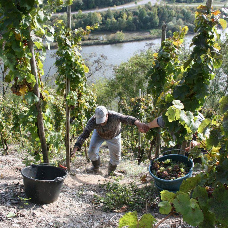 Steep Mountain Harvest